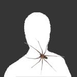 Lesanthus